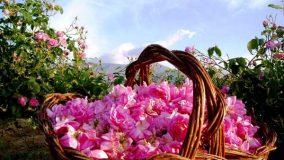 Розово масло
